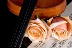 Violin And Peach Roses