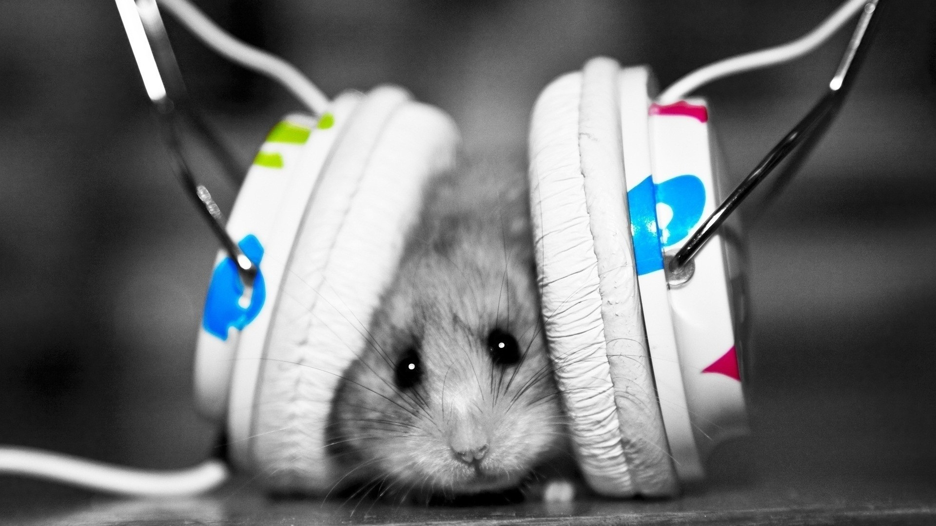 Headsets Hamster Wallpaper 1920x1080 px